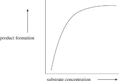 enzyme concentration graph